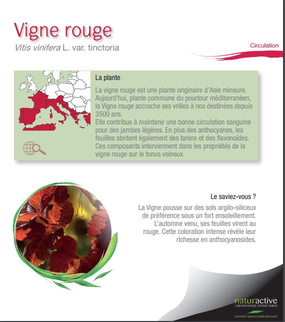 Vigne rouge fiche plante na pdf